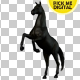 Black Horse Rearing 02 - VideoHive Item for Sale