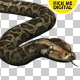 Python 02 - VideoHive Item for Sale