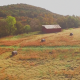 Aerial of Round Hay Bales on Farm - VideoHive Item for Sale