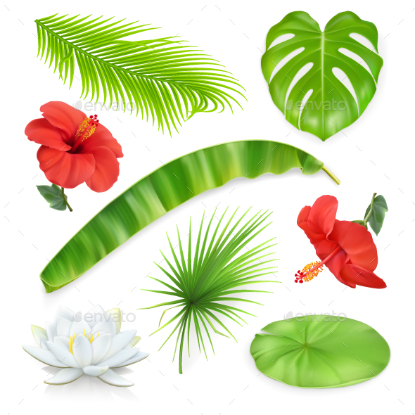 Jungle Set of Leaves and Flowers - Flowers & Plants Nature