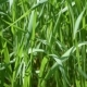 Lush Blades of Green Grass in a Meadow - VideoHive Item for Sale