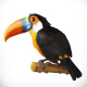 Toucan 3d Vector Icon