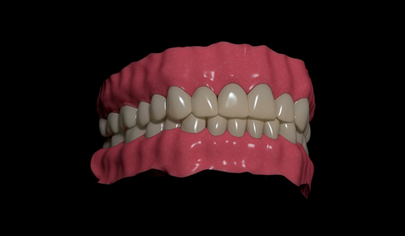 Human teeth - 3DOcean Item for Sale