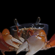 Crab Keying - VideoHive Item for Sale