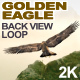 Golden Eagle Back View - VideoHive Item for Sale