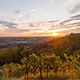 Vineyard Sunset - VideoHive Item for Sale