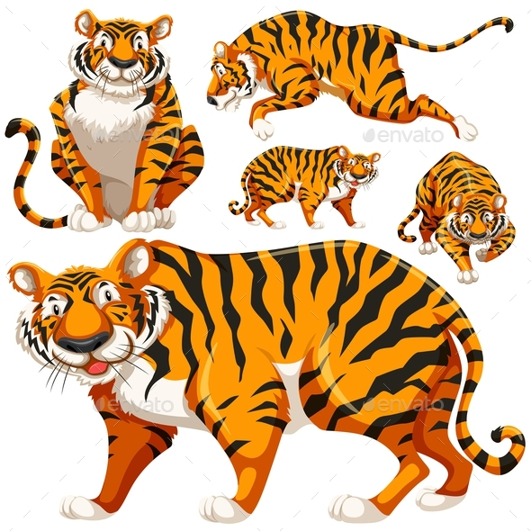 Set of Wild Tigers - Animals Characters