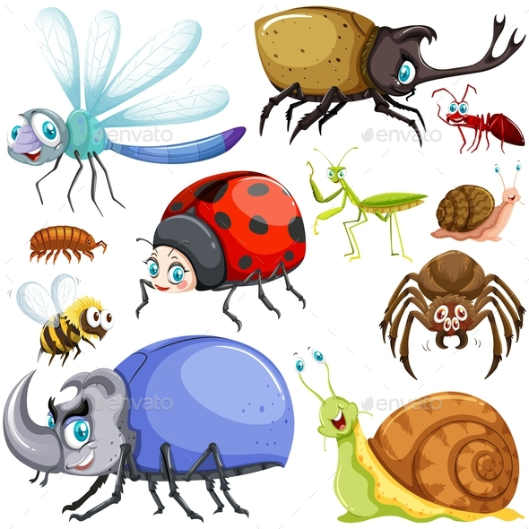 Different Kinds of Insects - Animals Characters