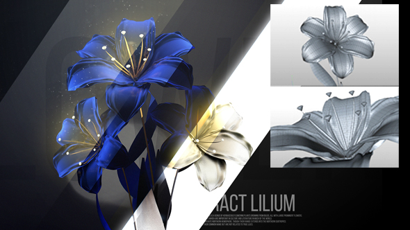 Lilium - 3DOcean Item for Sale