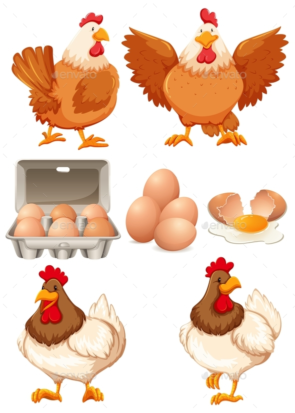 Chickens and Fresh Eggs - Animals Characters