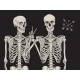 Human Skeletons Best Friends Posing Isolated - GraphicRiver Item for Sale