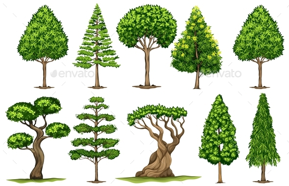 Different Types of Trees - Flowers & Plants Nature