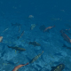 Underwater Fishes - VideoHive Item for Sale