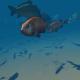 Submarine fish - VideoHive Item for Sale