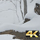Snowing on Forest Stump - VideoHive Item for Sale