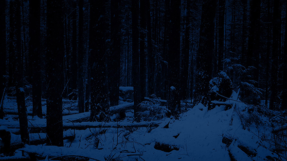 moving through night forest in snowfall by rockfordmedia videohive