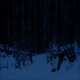 Path Through Snowy Forest At Night - VideoHive Item for Sale