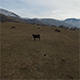 Cows and Horses on a Mountain Pasture. - VideoHive Item for Sale