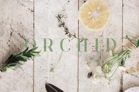 Orchid Font - Sans-Serif Fonts