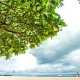 Beautiful Sandy Beach, Amazing Sky and Big Green Tree. Tropical Bali Island, Indonesia - VideoHive Item for Sale