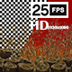 Gold Chine 4 - VideoHive Item for Sale