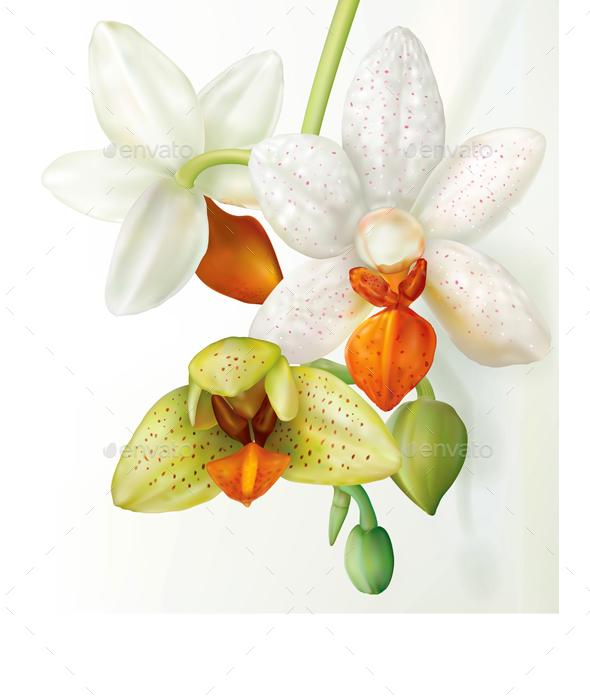 Phalaenopsis Flower that Blooms - Flowers & Plants Nature