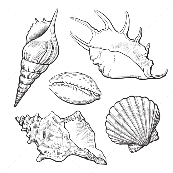 Set of Various Mollusk Sea Shells - Organic Objects Objects