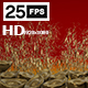 Gold Chine 5 - VideoHive Item for Sale