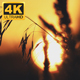 Sunset Over Forest 1 - VideoHive Item for Sale