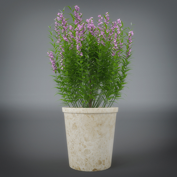 Interior Flower Plant - 3DOcean Item for Sale