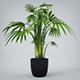 Interior Plant - 3DOcean Item for Sale