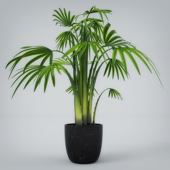 Interior Plant - 3DOcean Item for Sale