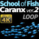 School of Fish Caranx-2 - VideoHive Item for Sale