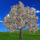 Growing Tree With Money - VideoHive Item for Sale