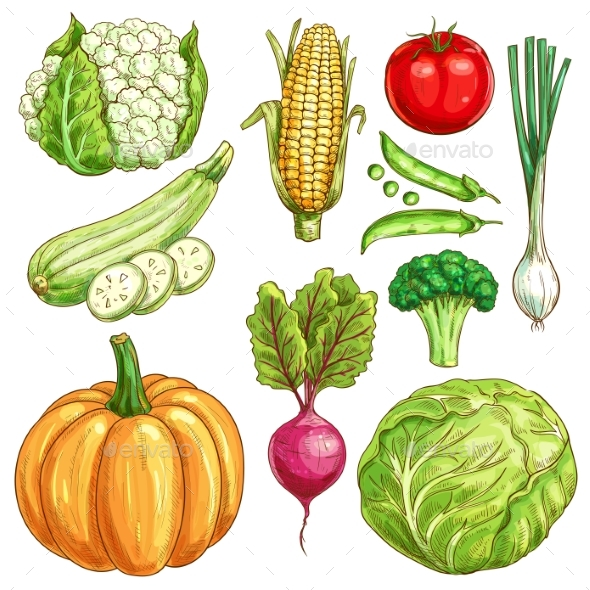 Farm Vegetables Vector Sketch Isolated Icons Set - Food Objects