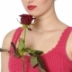 Woman Holding Red Rose and Smiling on a White Background. - VideoHive Item for Sale