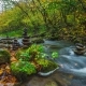Beautiful Creek Flow - VideoHive Item for Sale