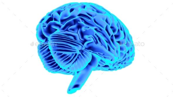 Human Brain 3D Render - Objects 3D Renders