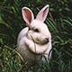 Furry - AudioJungle Item for Sale