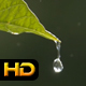 Water Drops on Leaves after Rain - VideoHive Item for Sale
