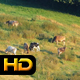 Cows on Alpine Meadows - VideoHive Item for Sale