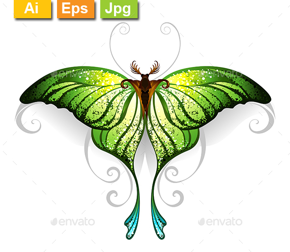 Green Butterfly - Animals Characters