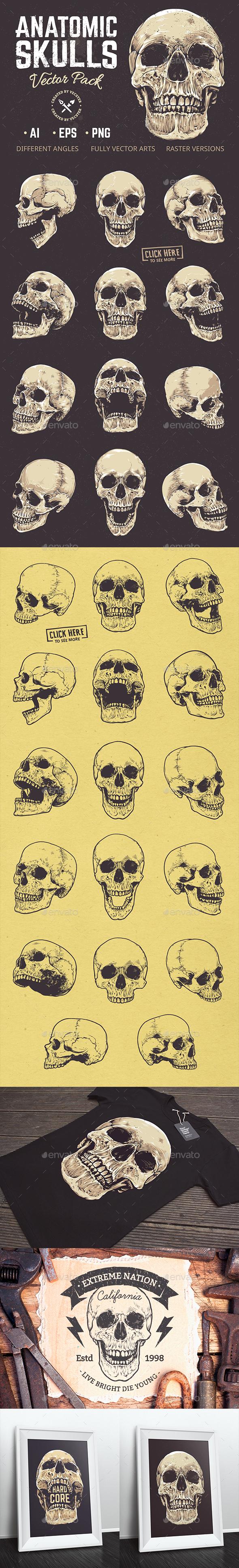 Anatomic Skulls | Vector Pack - Miscellaneous Vectors