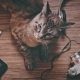 Cat Surrounded By Objects for Entertainment - VideoHive Item for Sale