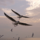 Seagulls - VideoHive Item for Sale