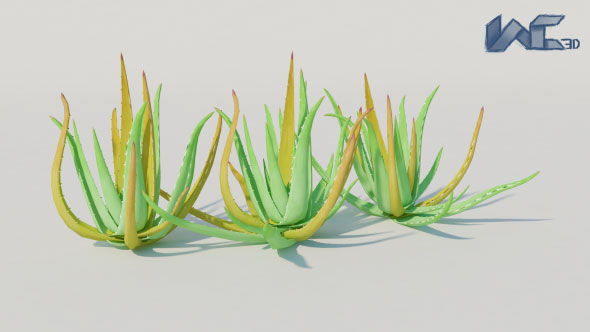 Aloe Vera - 3DOcean Item for Sale
