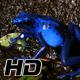 Azureus Dendrobates Tinctotius Blue Poison Dart Frog - VideoHive Item for Sale