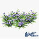 Blue Flower - 3DOcean Item for Sale