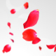 Rose Falling - VideoHive Item for Sale