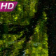 Wild Forest Lake - VideoHive Item for Sale